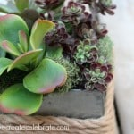 Succulent Centrepieces for Spring