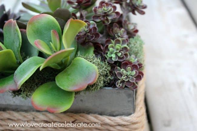 Succulent Centrepieces for Spring
