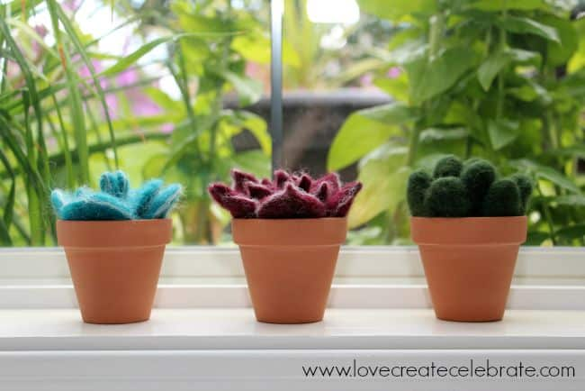 window succulents