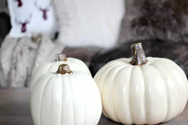 Pumpkins with colour variations are a great way to liven up your fall decor