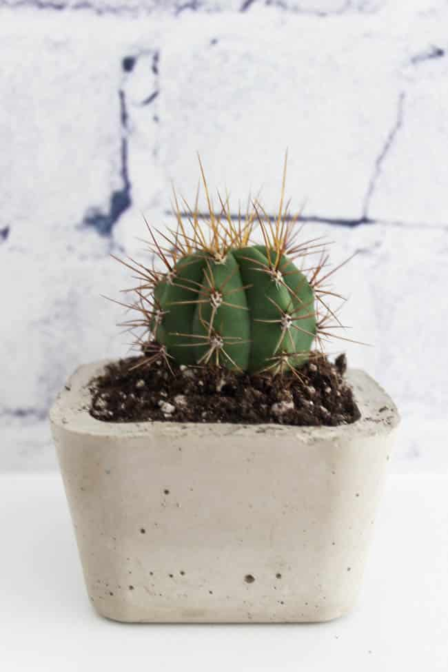 Mini Concrete Planters : Mini concrete planters faux succulents love create