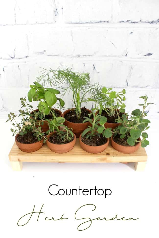 Make your own indoor countertop herb garden! Use Terra Cotta pots to keep your herbs close by all summer long! This simple DIY project includes the FREE build plans. Love this modern planter!
