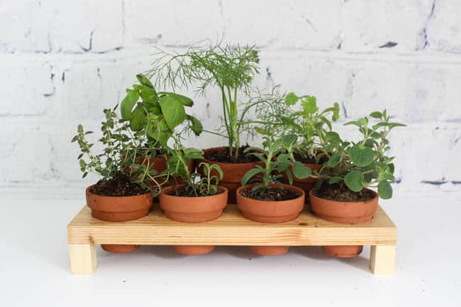 Make Your Own Indoor Countertop Herb Garden! Use Terra Cotta Pots To Keep  Your Herbs
