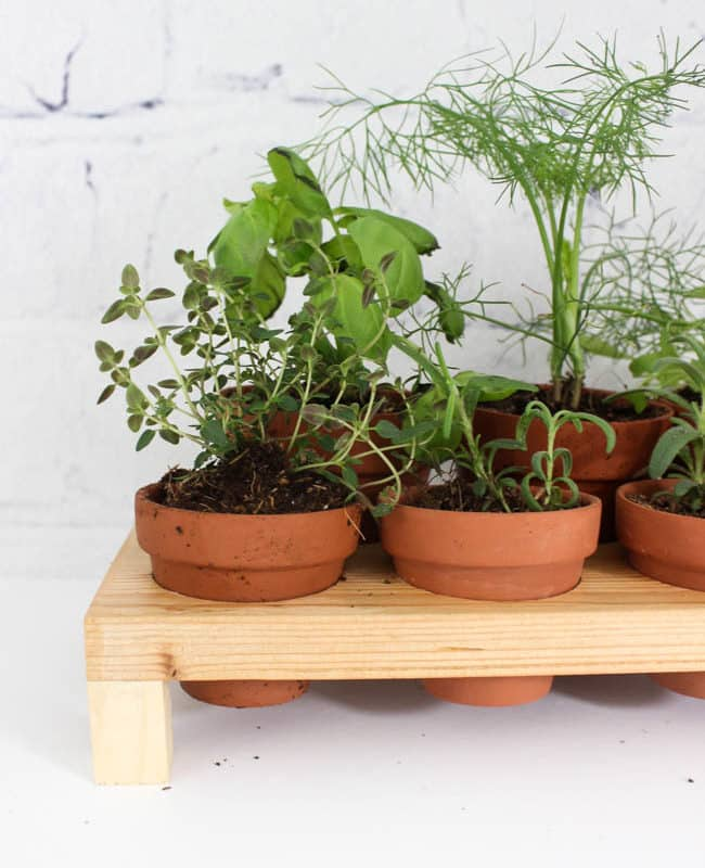 Make your own indoor countertop herb garden! Use Terra Cotta pots to keep your herbs close by all summer long! This simple DIY project includes the FREE build plans.