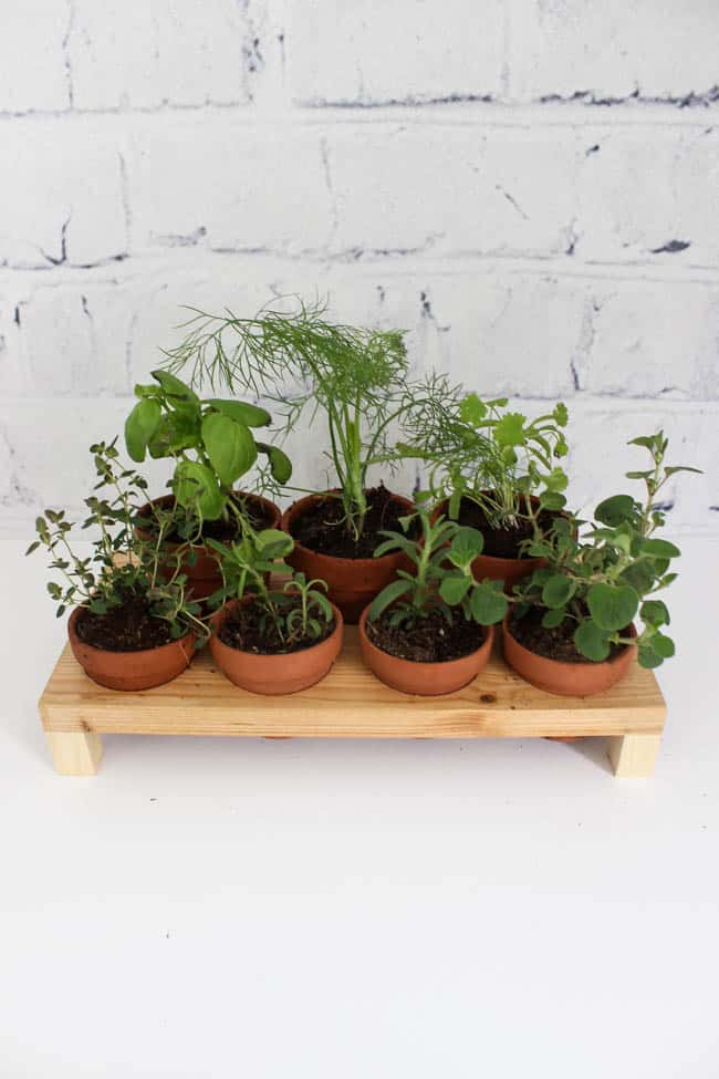 Cute countertop herb garden