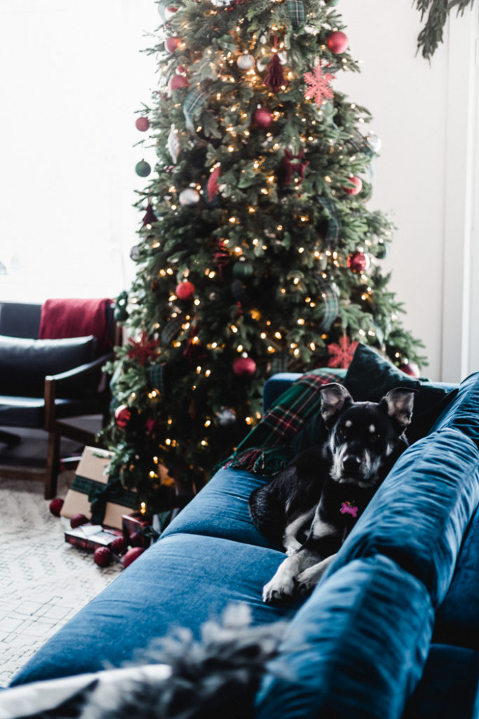 Dog on Couch beside Christmas Tree