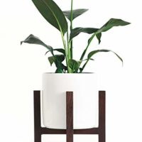 Short Ceramic Plant Pot with Wood Base