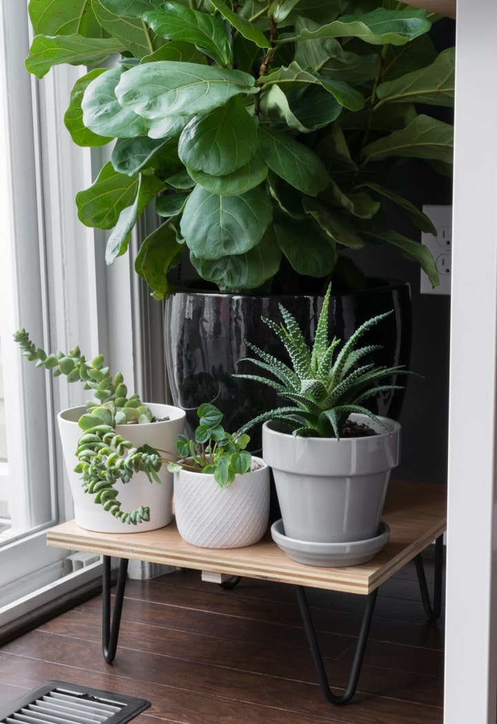 DIY Midcentury Plant Stand With Hairpin Legs