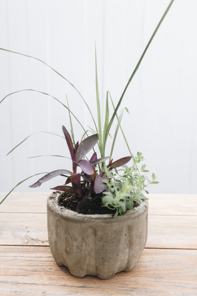 concrete bowl planter DIY