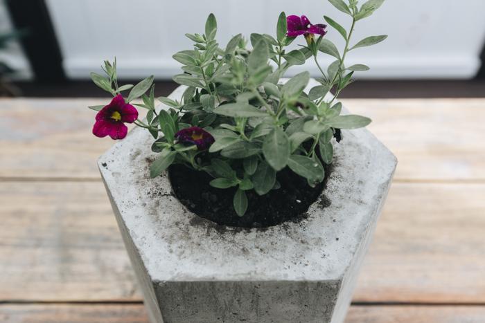 hexagon concrete planter DIY