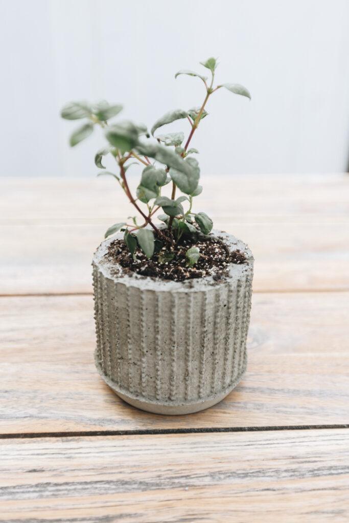 DIY cement planter ideas