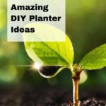 Growing plant with the text 20 amazing DIY planter ideas